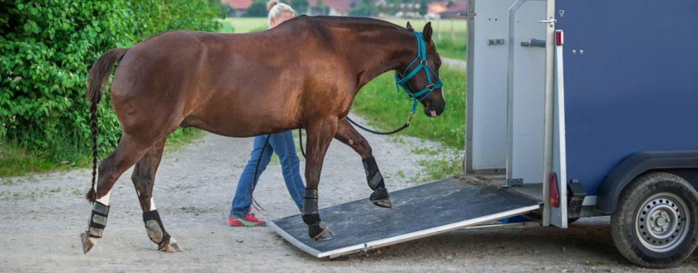 horsebox hire insurance